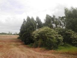 Área agrícola próxima à voçoroca em Luiziana/PR