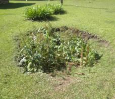 Terreno afundando em decorrência do solo cárstico