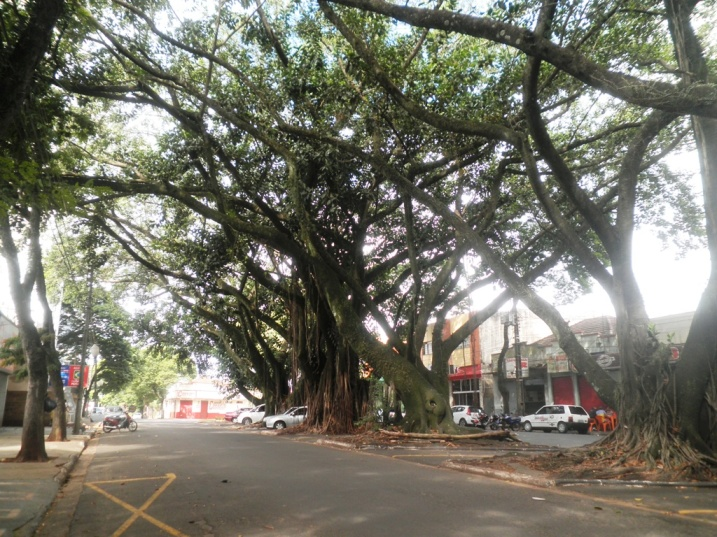 Avenida em Cianorte-PR. Foto: LIMA, 2013